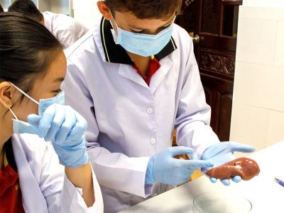 Herz- und Nieren Präparation im Biologieunterricht IGS HCMC