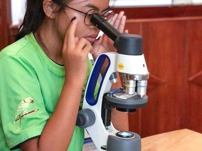 Die Zwiebelwurzel unter dem Mikroskop