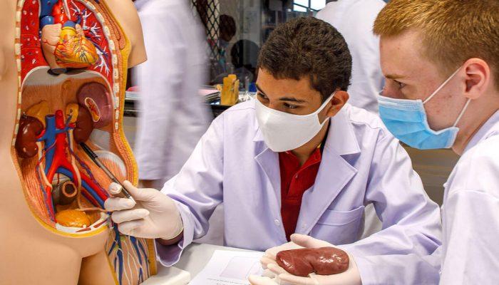 Herz- und Nieren Präparation im Biologieunterricht