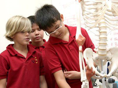 Sekundarstufe I, Naturwissenschaft: Schüler studieren menschliches Skelett