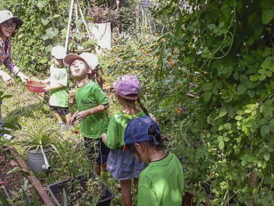 Limonade aus dem Kräutergarten- U6 in der Gärtnerei