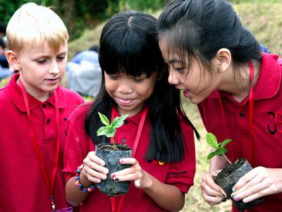 IGS Grundschule: Drei Schüler auf Exkursion mit Kaffeepflanzen
